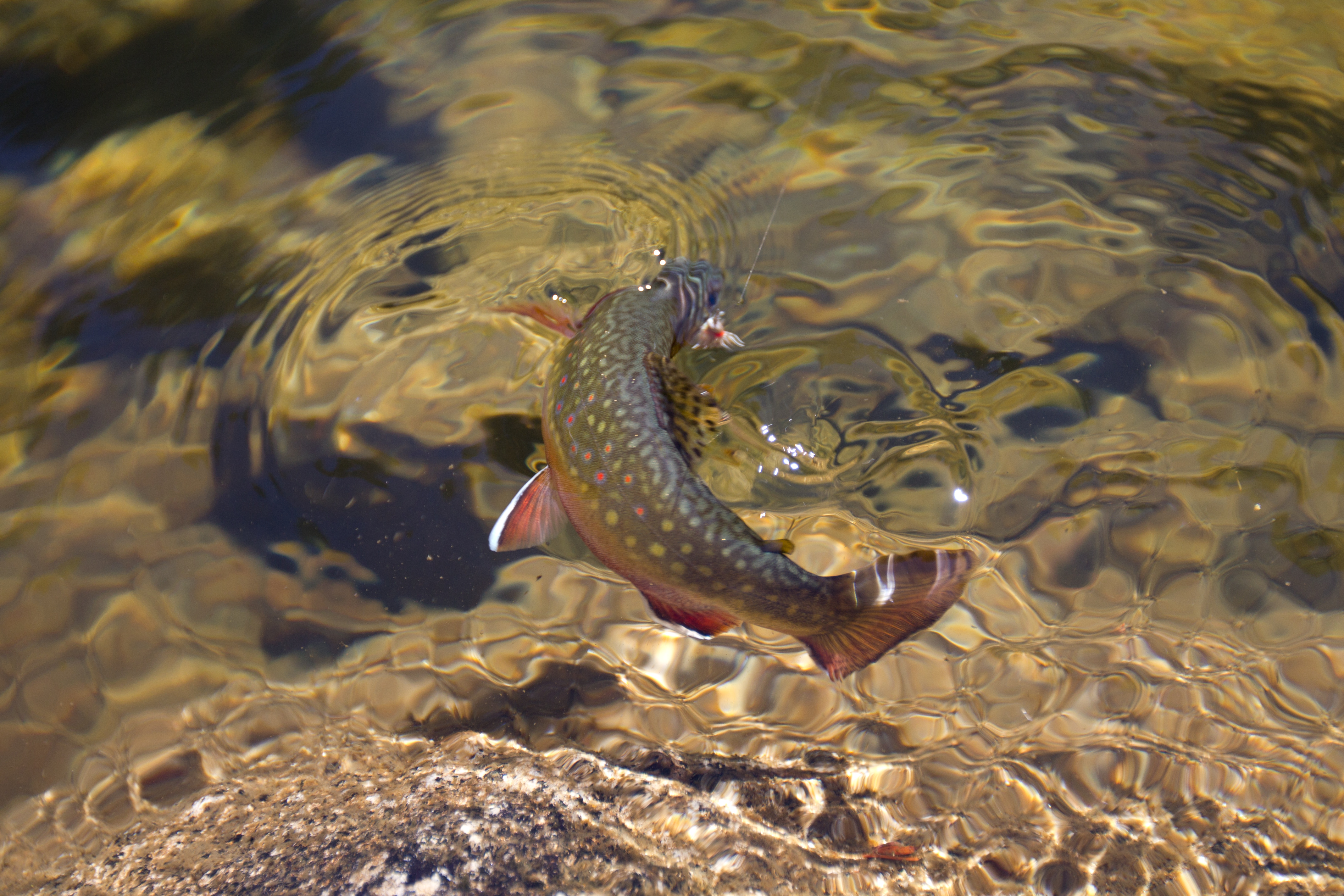 Trinity alps fly fishing journal for Rising fly fishing
